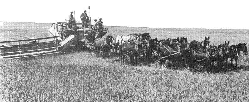 Mietitrebbia a trazione animale (Stati Uniti 1917)