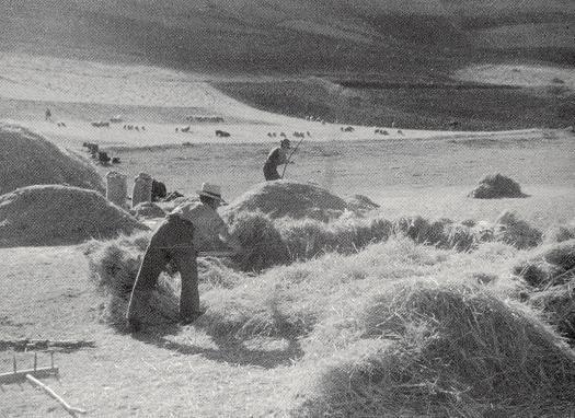 Battitura del grano (Castelluccio di Norcia 1950)
