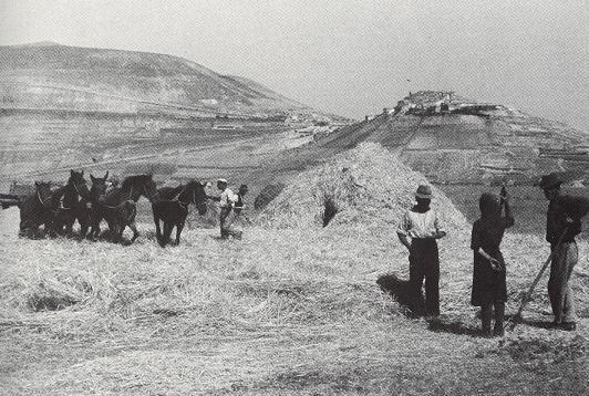 Trita coi cavalli (Castelluccio di Norcia 1950)
